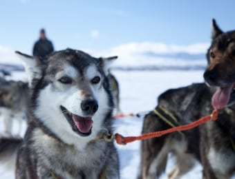 Best Lapland family holiday